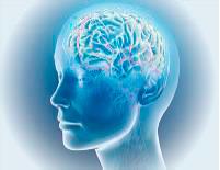 Brain Screen