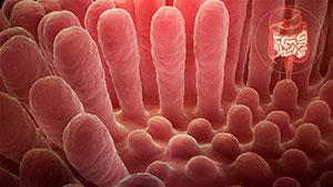 estudio microbiota intestinal