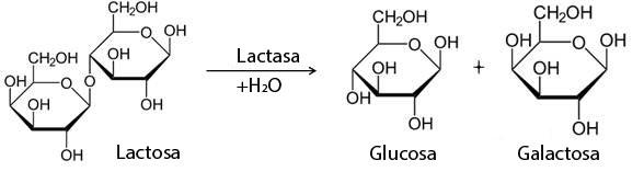 hidrolisis lactosa